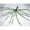 White Heather pk 12 Stems